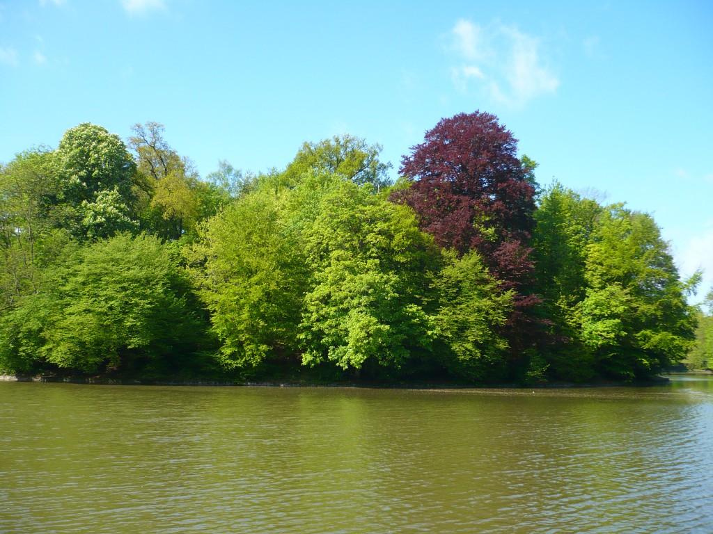 Forêt de la Cambre