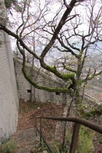 Escalier et arbre près de la Bastille