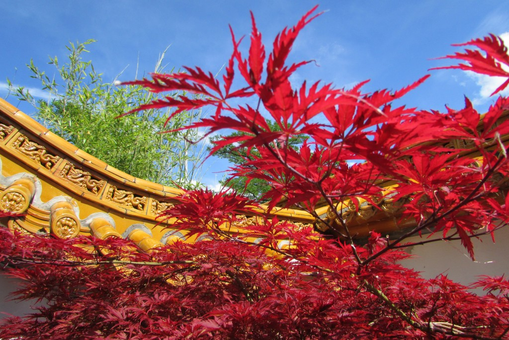 Jardin chinois, couleurs