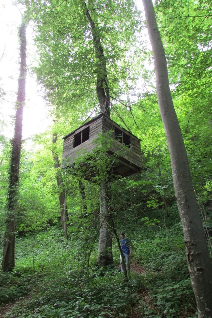 Cabane dans les bois !!