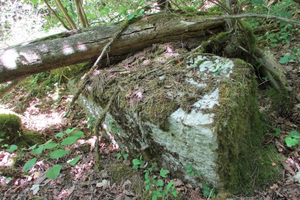 Pierre taillée dans la forêt