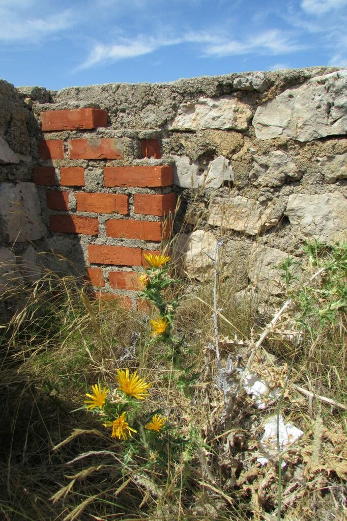 Briques et fleurs