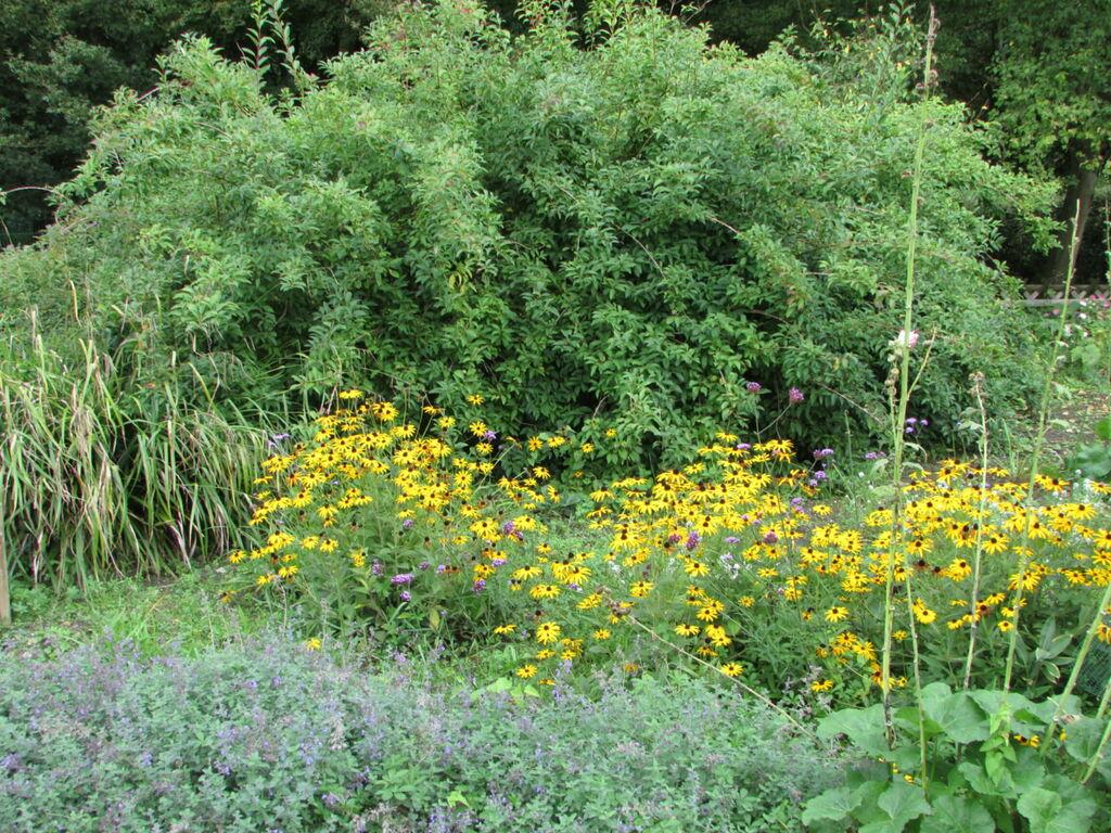 Vallée aux fleurs