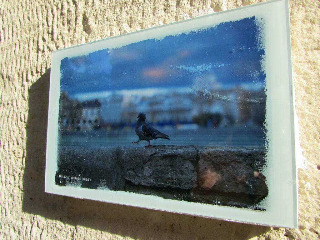 #backtothestreet, pigeon