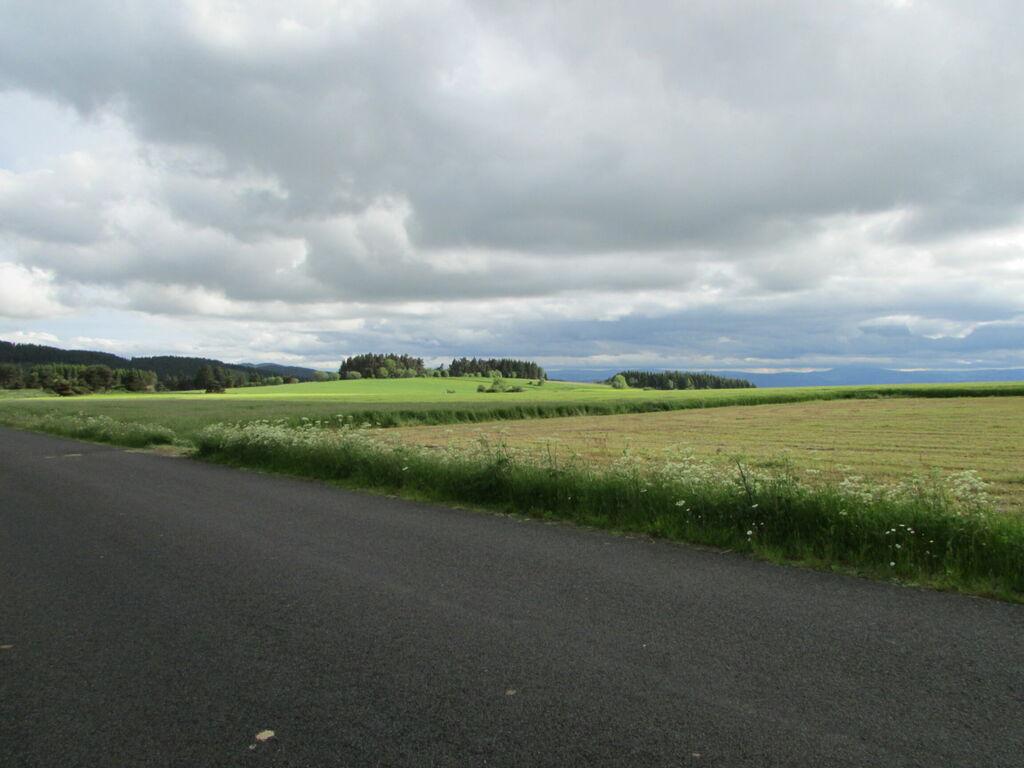 Route et champs