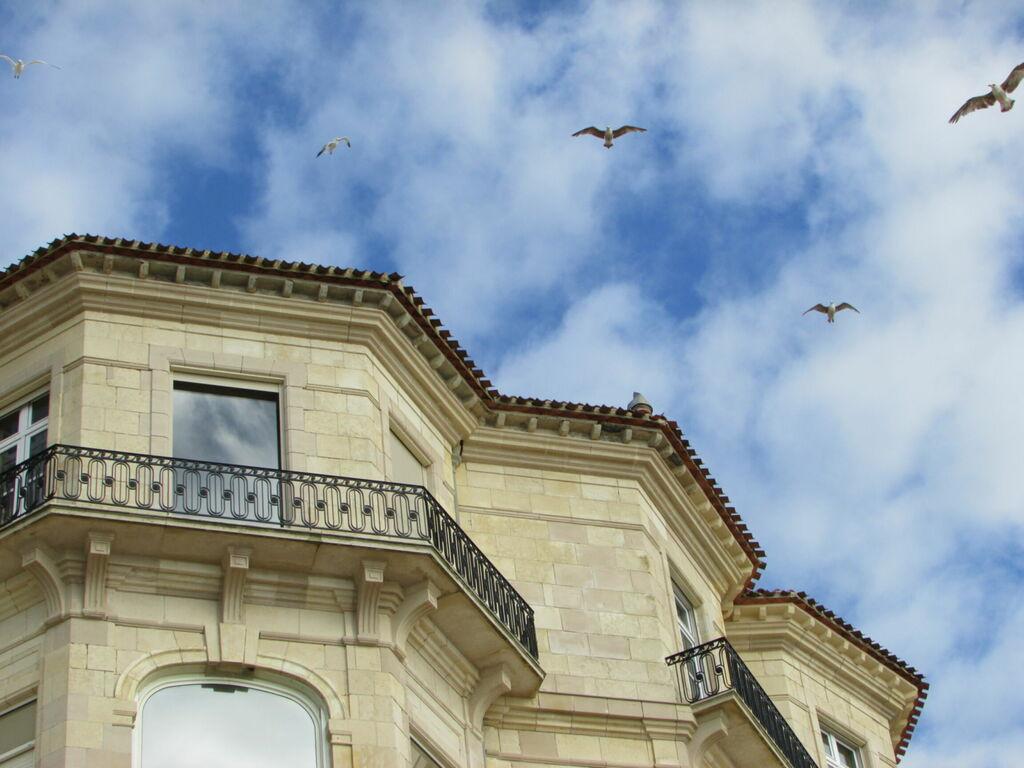 Oiseaux et bâtiment