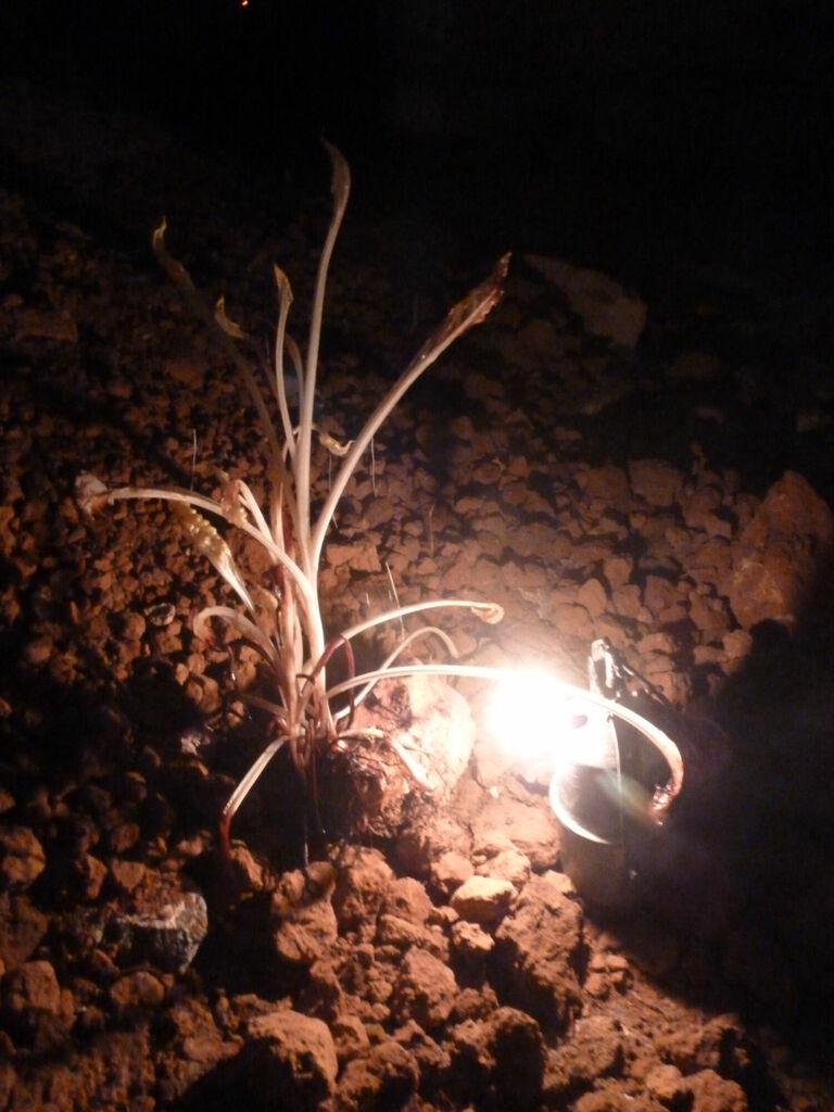 Plante d'obscurité