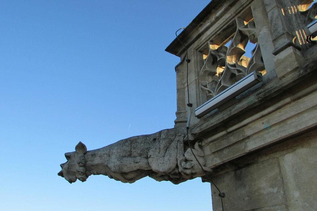 Gargouille de la Tour Philippe le Bon