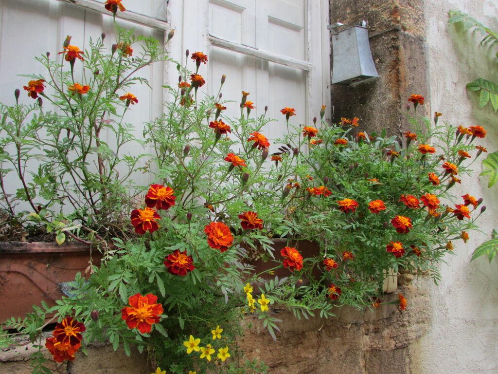 Fleurs dans une cour