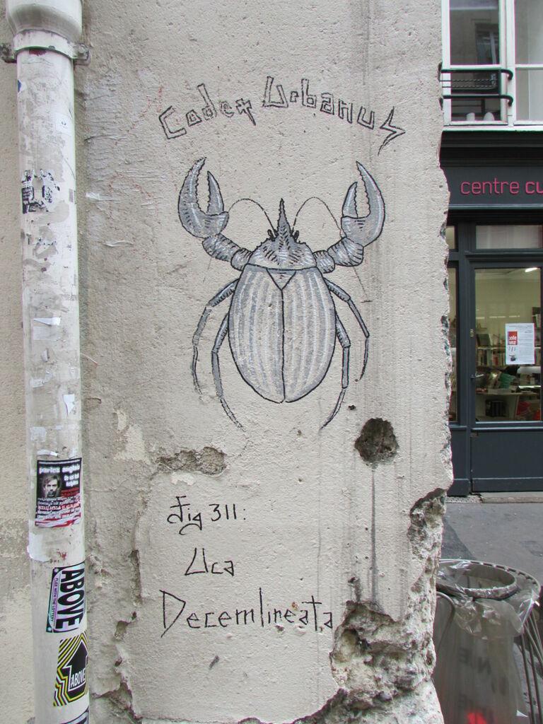 Codex Urbanus  : Uca Decemlineata